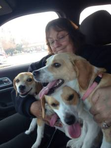 pups after surgery